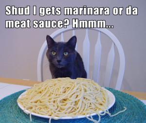 spaghetticat